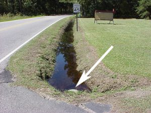 Debris-clogged drainage ditches become breeding sites for mosquitoes (Photo - M. Waldvogel, NCSU)