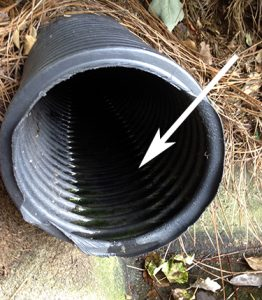 black plastic drain pipe with stagnant water inside