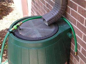 Rain barrels under your gutter collect rainwater to use in your garden