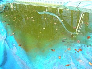 Plastic tarp over a pool and filled with stagnant water, algae and leaves.